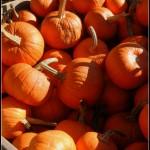 Photos | L'automne arrive