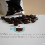 Découverte | Le café le plus rare du monde