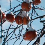 COCKTAIL | Le cidre de glace du Domaine Pinnacle