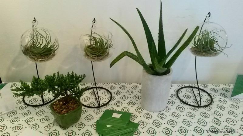 Des plantes livr es gratuitement montr al montreal addicts for Ou acheter des plantes