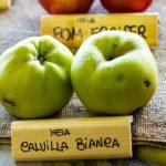 GASTRONOMIE | S'abonner à des paniers de légumes même en hiver