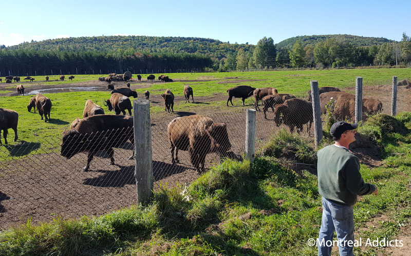 Terre des Bisons | Blog Montreal Addicts