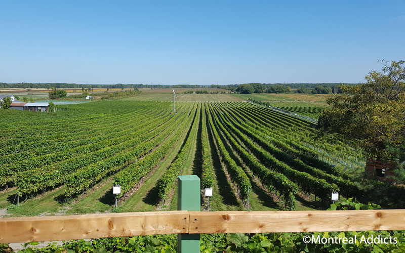 Vignoble des Vents d'Ange | Blog Montreal Addicts