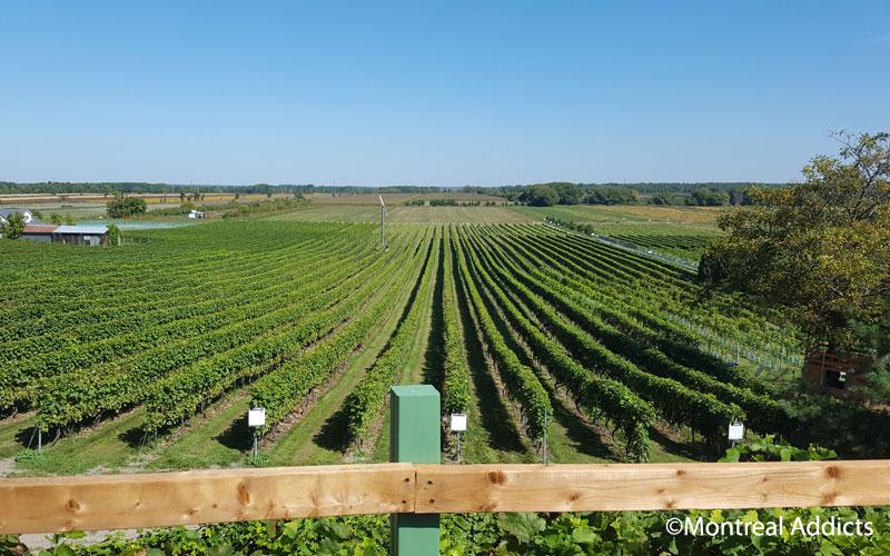 Vignoble des Vents d'Ange | Blog Montreal Addicts