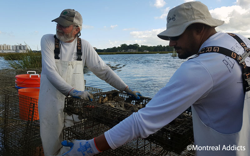 Pleasure House Oyster Farm Virginia Beach | Blog Montreal Addicts