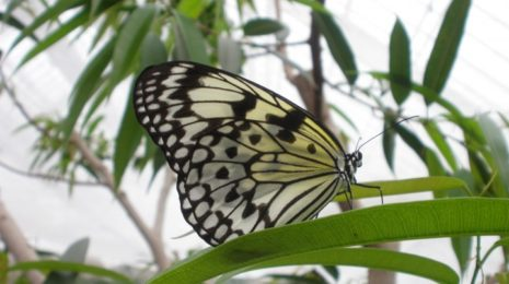 papillons-en-liberte