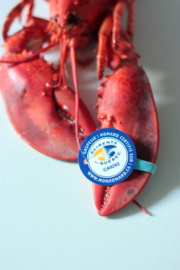homard-de-gaspesie-2