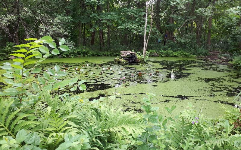 Parc Nature Bois-de-Liesse